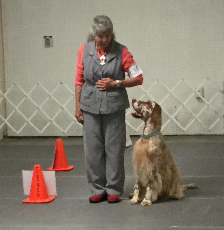 Home - Sandia Dog Obedience Club