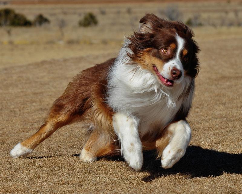 Around The Area - Sandia Dog Obedience Club